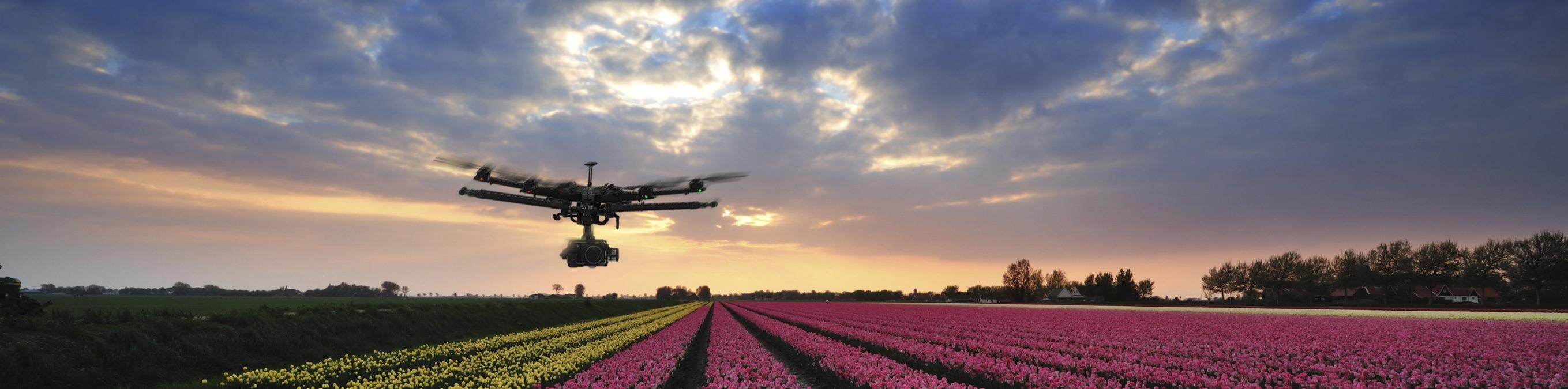 drone-tulpen3